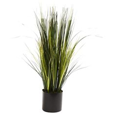 "3' Onion Grass Plant.  Everyone loves the dense, bold beauty of onion grass. But, of course, it's tough to grow, and then there's the matter of those little onion bulbs that definitely have that onion odor. Well, here's all the good, with none of the bad. Standing three feet in height, this Onion Grass piece is full of lush, straight stalks, without the ""oniony"" smell. Plus, it'll stay that way for years, with nary a drop of water. #oniongrass #silkplant"