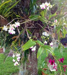 Orchids just keep popping!!!