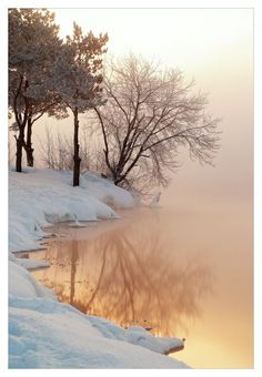 Winter mist and a tree reflecting in the golden lake. #PANDORAloves the beauty of a snow-covered landscape.
