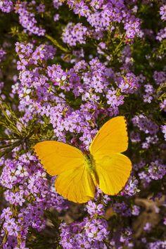 """ ~~Yellow Butterfly O Flowers Garden Love """