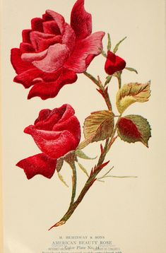 Embroidered American beauty rose. #embroidery #needlework A Treatise on Embroidery.