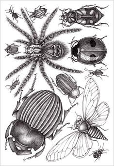 Patterns and Designs - Joyce hamillrawcliffe - Picasa Web Albums Bug Art, Art Worksheets, Insect Art, Bugs And Insects, Arts Ed, Expo, Botanical Illustration, Art Inspo, Art Lessons
