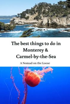 The Best Things to Do in Monterey and Carmel | A Nomad on the Loose Visit California, California Travel, American Attractions, Whale Migration, California Destinations, Travel Destinations, America And Canada, North America, Carmel Beach