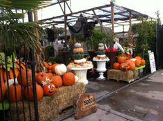 Beautiful Use Of Campania International Iron Urns For A Fall/Autumn Display  At Nicholson . Garden Center DisplaysFall DisplaysRetail ...