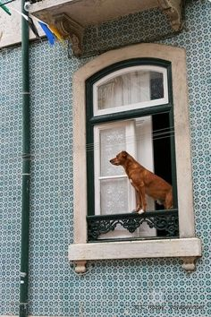 Dog in window . . this doesn't look safe at all