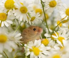a frolic in the flowers!