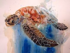 Sea Turtle Still Limited edition print by Rachel Walker Available at www.quirkyfox.co.nz