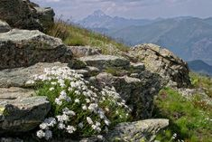 Valle Maira Wandern - Valle Maira - Alta via di Marmora Schema