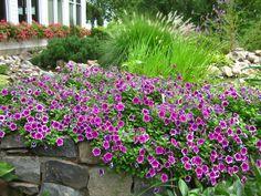 duftpflanzen im garten - kräuter und blumen kombinieren | garden, Terrassen ideen