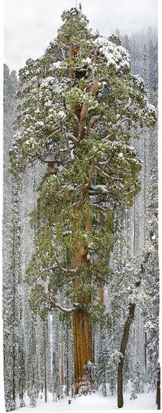 este-arbol-de-3-200-anos-es-tan-grande-que-nunca-habia-sido-fotografiado-individualmente-hasta-ahora