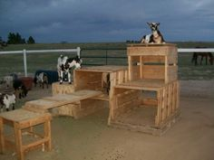 diy pallet goat play structures - Google Search Keeping Goats, Raising Goats, Goat Playground, Natural Playground, Playground Ideas, Miniature Goats, Goat Shed, Goat Shelter, Goat Care