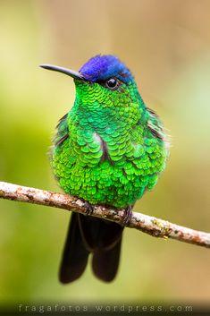 All sizes | Hummingbird | Flickr - Photo Sharing!
