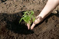Which Soil Is Best for Plant Growth? Different soils and the best plants to grow in them.