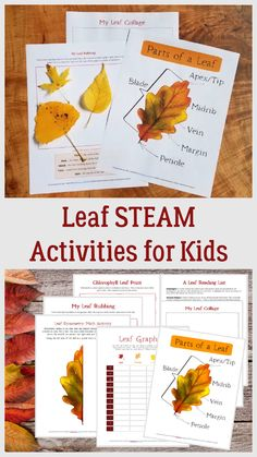 Learn the parts of a leaf, make leaf rubbings, create a leaf colleage and mix science, math and art with these printable activities for preschool, kindergarten and elementary ages! Outdoor Water Activities, Nature Activities, Steam Activities, Outdoor Learning, Kids Learning Activities, Summer Activities For Kids, Autumn Activities, Science Activities, Fun Learning