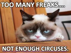 Grumpy Cat Memes That You Will Love! - Grumpy Cat Memes That You Will Love! The Effective Pictures We Offer You About Funny fails A quali - Grumpy Cat Quotes, Funny Grumpy Cat Memes, Funny Animal Memes, Funny Animal Pictures, Funny Cats, Funny Animals, Grumpy Cats, Cats Humor, Funny Quotes
