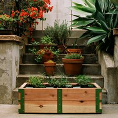 ReForm School: Patio Garden Kit by Scout Regalia