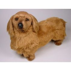 http://animalprops.com/902-thickbox_default/chanel-dachshund-doxie-dog-stuffed-plush-animal-display-prop.jpg