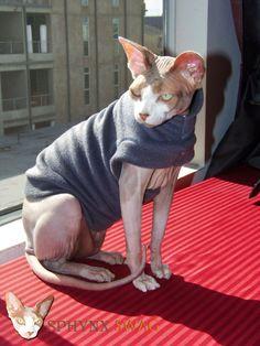 """Sphynx Designer Clothing """"By The Power of Grayskull"""" Fleece Cat Sweater"""