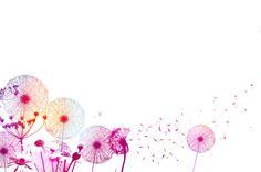 Akina Natural Health & Beauty - Gareth Procter Graphic Design