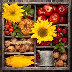 Autumn Collage In Vintage Box. Flowers Sunflower, Wild Rose ...