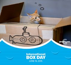 Official Cat Holiday: International Box Day