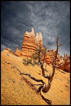 Hoodoos in Bryce Canyon National Park; photo by .rickz