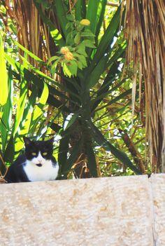 OK so its Herzliya but close enough. Tel Aviv Mustache Alley Cats