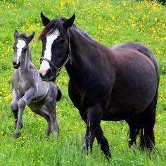 Mor og sønn #mother #son #hest #horse #lifeisgood #liveterherlig #livet #instahorse #liten #beautiful #cute #trøndelag #melhus #i_love_norway #ignorway #igdaily #picofday