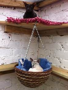 hanging basket cat bed ❤️ ★ Learn about #cats & Get cute #cat #stationery at Ozzi Cat: Cat Magazine & Cat Stationery! Visit Now >> http://OzziCat.com.au ★ ❤️