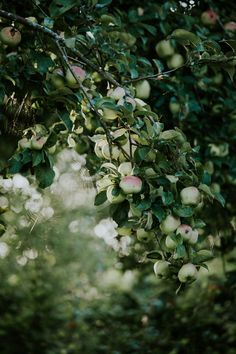 Blushing apples guarded by a spider web. Fruit Garden, Garden Trees, Baumgarten, Apple Tree, Farm Life, Country Life, Beautiful Gardens, Mother Nature, Flower Power