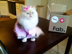 I am fabulous and I know it.