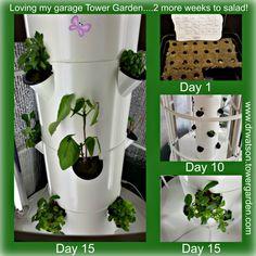 Finally got my tower going in Texas....growing in my garage!  #ilovemytowergarden www.drwatson.towergarden.com  #growyourownproduce