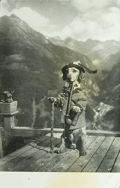 For the Love of PAWple — Moritz, the Bavarian Yodel Dachsie vintage. Vintage Dachshund, Dachshund Art, Dachshund Puppies, Weenie Dogs, Vintage Dog, Dogs And Puppies, Daschund, Dapple Dachshund, Chihuahua Dogs