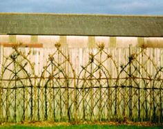 """Woven willow fencing or """"Fedge"""". LOVE this shaping!"""