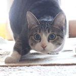 cat wiggle wiggle wiggle funny