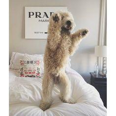Help! A BEAR!  @meghangrauzlis