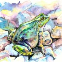 Plump frog sitting on montly watercolor rocks tattoo design