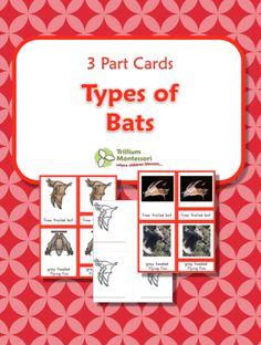 Bats Cover Montessori 3 part Cards Free Printable