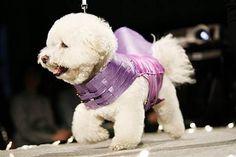 WEB LUXO - Pets: Pet Fashion Week São Paulo