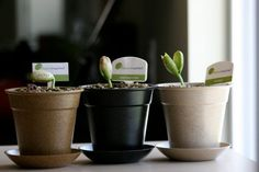 Look carefully. There's a special message written on the plant! Grow your intentions today.  http://www.kickstarter.com/projects/491058411/ibeaninspired-eco-friendly-gift-to-inspire-a-loved