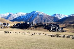 Free Your Mind Travel: In this post we present the 10 best free things to do in New Zealand: South Island.