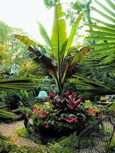 Planter featuring banana