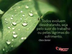 Todos evoluem desidratando, seja pelo suor do trabalho ou pelas lágrimas do sofrimento. #chicoxavier #vida