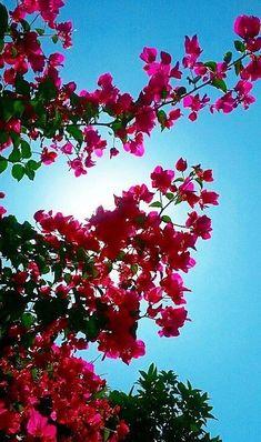 Wallpaper Nature Flowers, Pop Art Wallpaper, Flower Background Wallpaper, Flower Phone Wallpaper, Flower Backgrounds, Flowers Nature, Wallpaper Backgrounds, Love Wallpapers Romantic, Beautiful Flowers Wallpapers