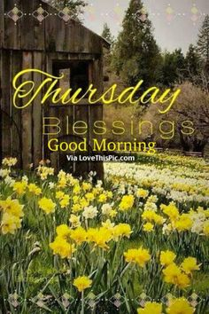 Happy Thursday!  Every day is a blessings which is why we have gathered 20 of the best Happy Thursday blessings quotes for you to share with your friends and family.