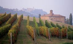 Taste the best of Italy's Piedmont region on this route through Langhe and Roero, enjoying its outstanding barolo and barbaresco wines, staying at vineyard B&BS and eating at traditional osterie