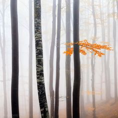 Delicate Forest by Evgeni Dinev, via Flickr