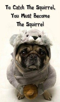 Nutty Pug !