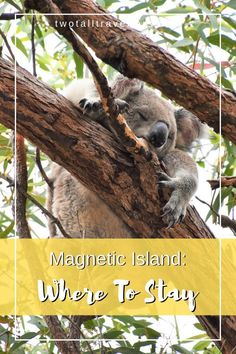 Looking for the best Magnetic Island accommodation? Read our top list of the best places to stay, whether you're a budget backpacker or luxury travel guru! New Zealand Itinerary, Beach Bungalows, Weekend Breaks, Best Places To Travel, Island Life, Australia Travel, Hiking Trails, Van Life, Luxury Travel