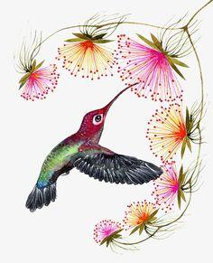 Blooming // SALE 3 for 2 // hummingbird print, bird watercolor painting print, size (No. Bird Illustration, Watercolor Illustration, Bird Drawings, Easy Drawings, Watercolor Bird, Watercolor Paintings, Art Colibri, Funny Bird, Hummingbird Art